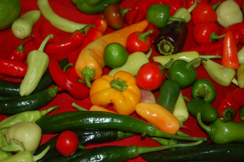 lots of peppers from my garden & from next door!
