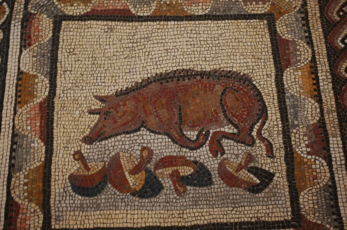 This beautiful mosaic tile scene of a truffle pig with his spoils in the Museum of animals in the Vatican Museum remined me of a possible outing to forage for mushrooms in the woods around Cortona...