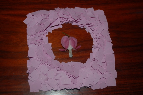 Things to do with cut-up paper and a single flower petal!