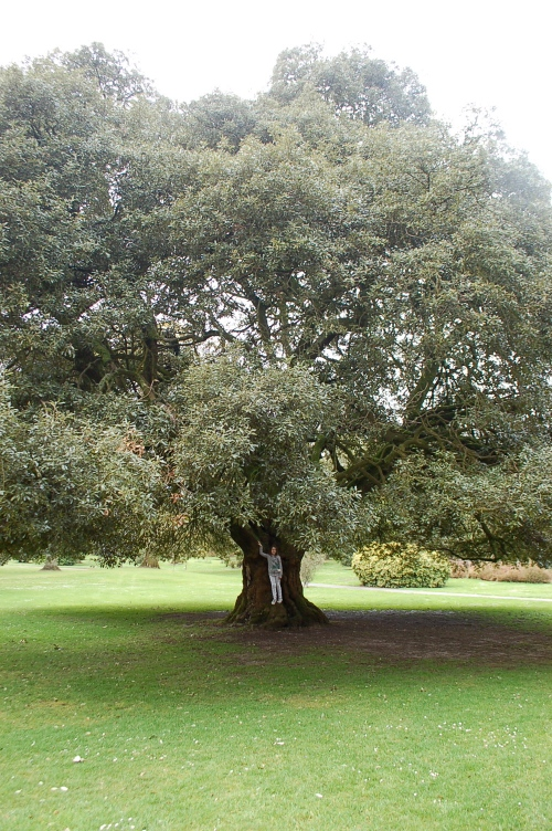 One of the many 150 year old trees on the estate