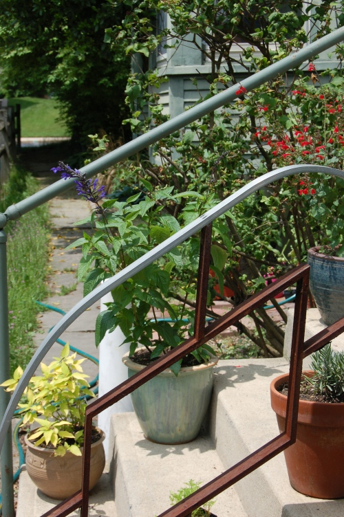 The back steps to my little yard.