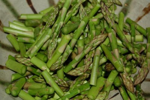 Luminous asparagus