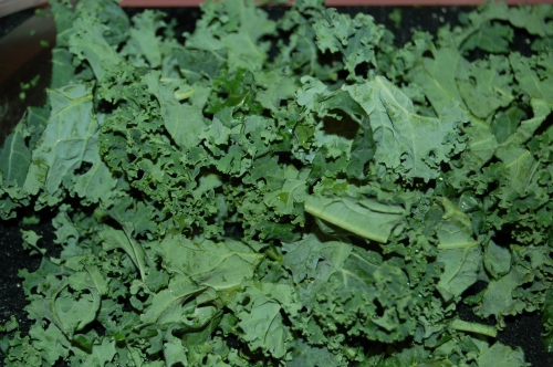 Hardy and healthy kale