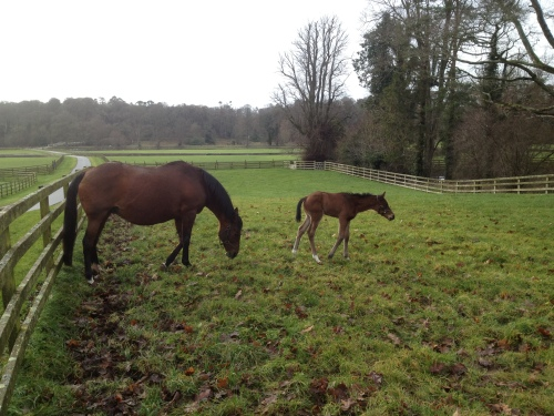first foal of the year in Mount Juliet's Ballylinch Stud.